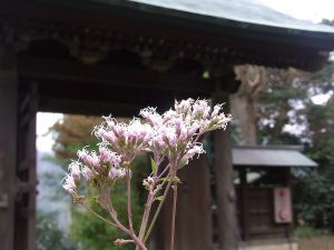 Shinzenkoji02
