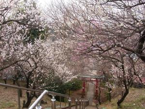 Higashikata02