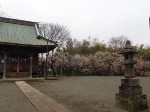 Higashikata03