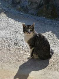 Oowakudani_cat