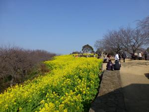 03ninomiya_azumayama