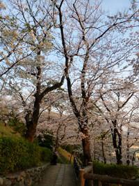 Tamagawa02_2