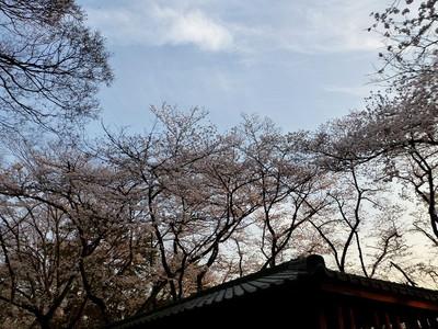 Tamagawa03