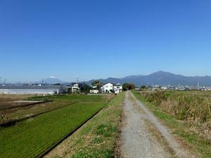 03shibuta_2