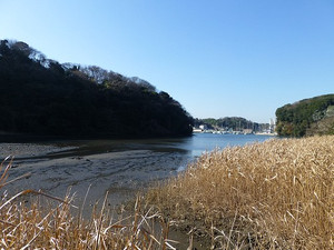 Koajiro_higata