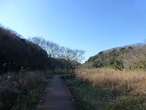Koajiro_yanagi