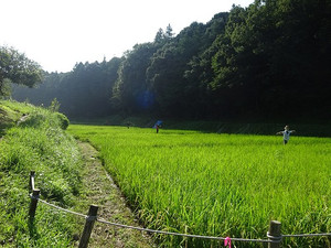 Asahiyato