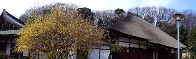 Saihoji03