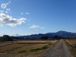 Shibuta_r
