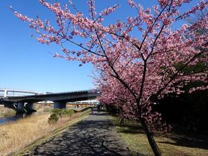 Kawadu02
