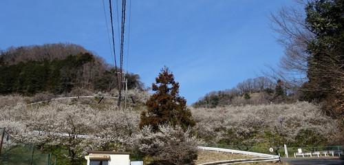 Honzawa01