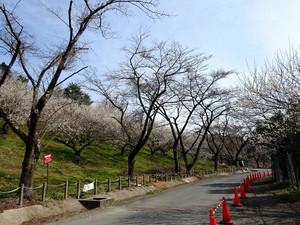 Honzawa03