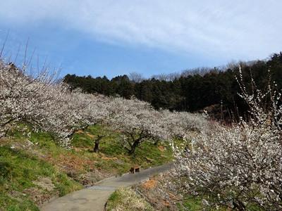 Shirokaga04