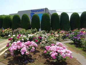 Takanashi02