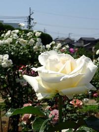 Takanashi04