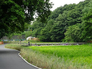 Satoyama02