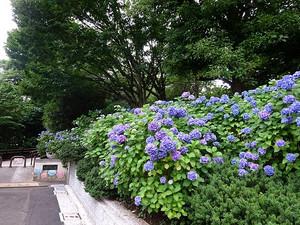 Tamagawadai01