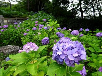 Tamagawadai06