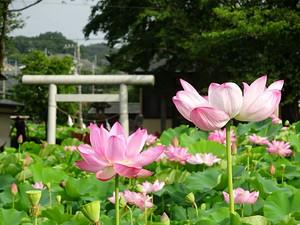 Oyamada06