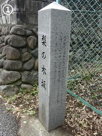 01nashinoki02