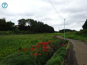 07syobuzawa