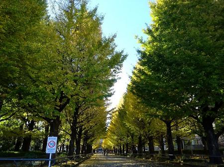 Hiyoshi04