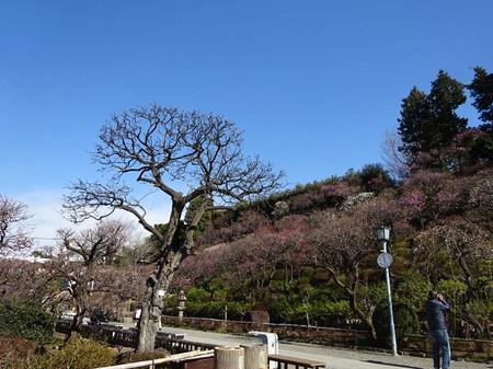 Ikegami04