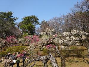 Ookurayama
