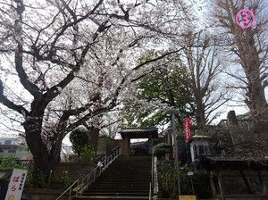 03ganseiji01