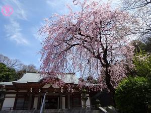 09zengyoji02