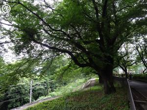 07yokoyama