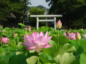04oyamada