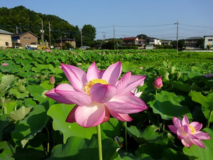 Oyamada12