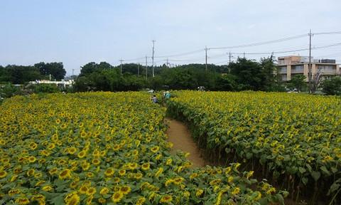 Kurihara2_01
