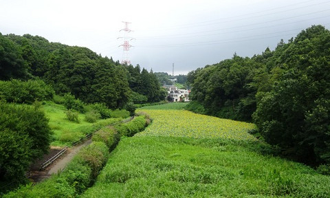 Oiwake04