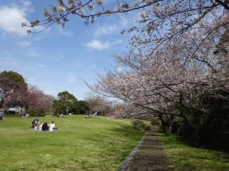 Sakura_p01