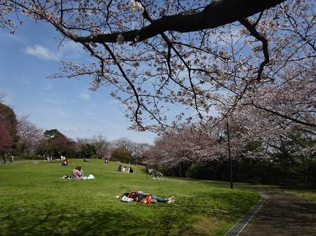 Sakura_p02