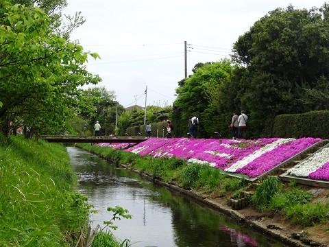 Shibuta07