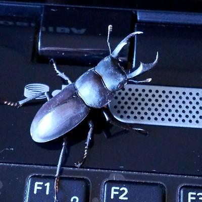 S_beetle20180603